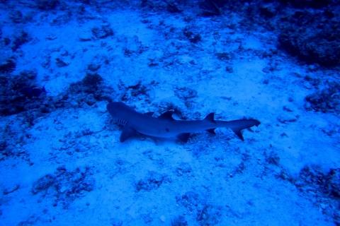 Maldive - Isola di Ellaidhoo - North Ari Atoll - 1996
